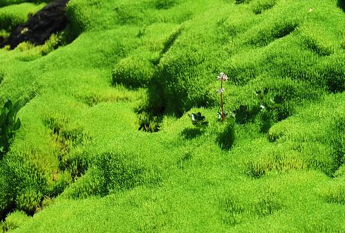 13 - North Ptarmigan Moss-scape
