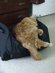 Jasper napping on the duffle bag