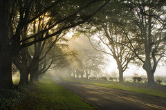 Badbury Avenue (antonyspencer) Tags: road wood autumn mist tree misty sunrise woodland kingston rings dorset spencer avenue antony lacy beech wimborne badbury 1dsmkii