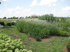 garden at donamire (katialondon) Tags: lexingtonky