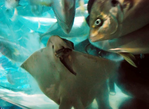 Stingray Eating
