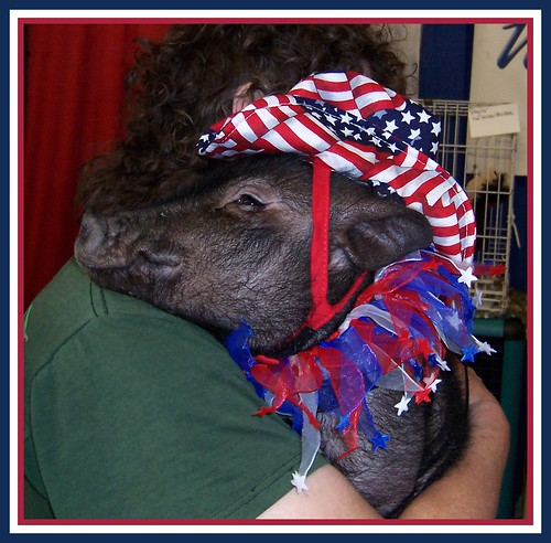 Patriotic Piggy...