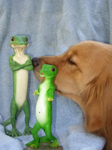 geico gecko wallpaper. Remy meets the Geico Gecko's