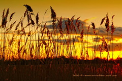 Septiembre (Renato J. Lpez Bald) Tags: sunset reed yellow atardecer wheat amarillo renato trigo caas wheatfield espigas caaveral afoto gigashot canon400d sigma18200os tff1 renafto dreamingphotos