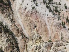 Grand Canyon of the Yellowstone (Nicholas Rinaldi) Tags: nature hiking yellowstonenationalpark yellowstone grandtetons tetons nationalparks