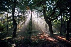 Lichtstralen in bos (chakrawandelingen) Tags: nature energy power walk experience spirituality chakra