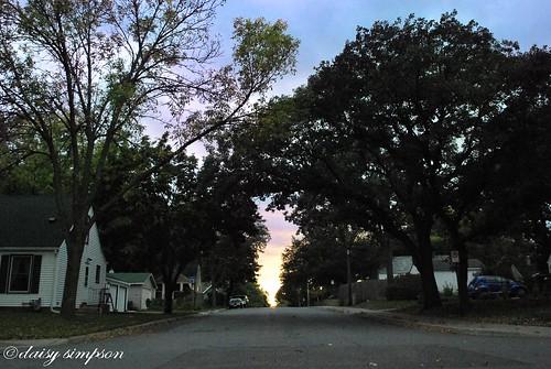 044 canopy trees