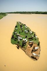 Livestock Floods