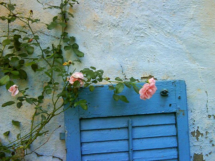 roses & blue