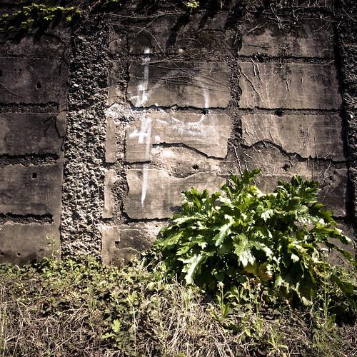 Tag, Weed, Wall, Harajuku