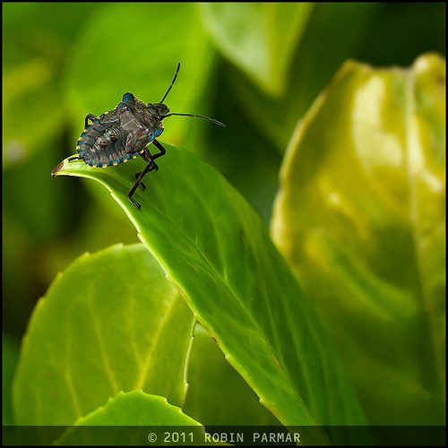 dancing on the leaf edge