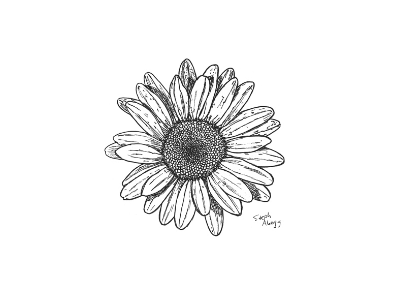 Drawings Www Stephabegg Com