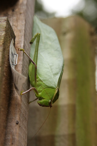 The Bug 2