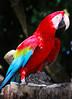 Parrot (Mohd_fluBBer) Tags: red slr bird digital nikon parrot colourful zoonegara flubber burung d80 kakaktua
