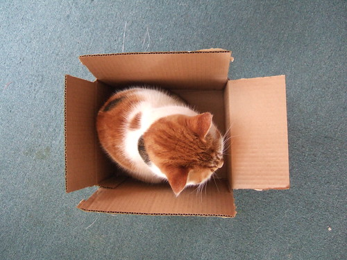 Small cat, small box.