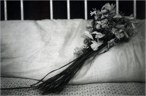 mapplethorpe_polaroid