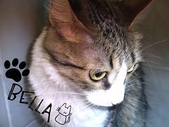 Bella estilo posero :) (♥Jopii♥) Tags: bella picnik gatita miau