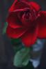 [044/365] Pre-Valentine's Day