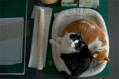 that cat mat by you.