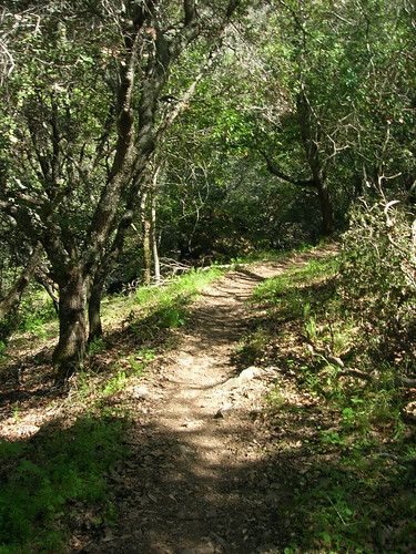 Section of single track