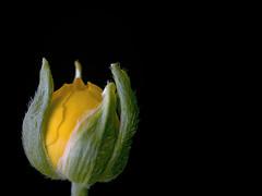 Nacer (_Zahira_) Tags: light naturaleza black flower macro luz nature lafotodelasemana negro flor olympus nd capullo ngr e500 uro espacionegativo 100vistas 35mmmacro ltytr1