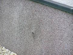 Buntsteinputz 1 (mauertrocken) Tags: am wand bau blasen pfusch feuchtigkeit sockelputz feuchte baupfusch feuchterkeller nassewand nasserkeller buntsteinputz blubbeln chemicalgrouting edelputze
