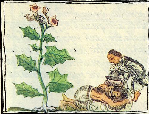 limpia codex