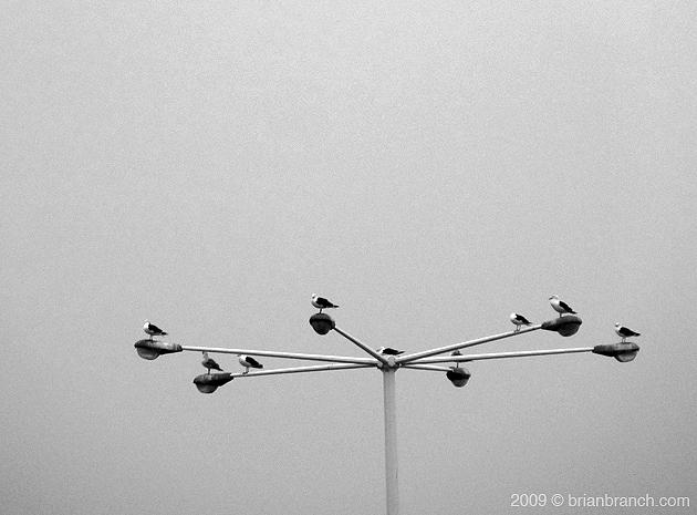 P1030393_gulls