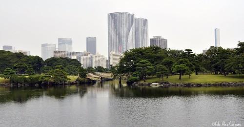 hamarikyu gardens ( tokyo )