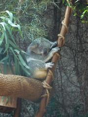 Columbus Zoo 198