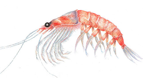 buy-krill-oil-uk-img3
