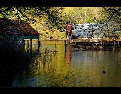 Boathouses, Loch Ard (Nurmanman) Tags: lake scotland highlands loch boathouse trossachs aberfoyle lochard