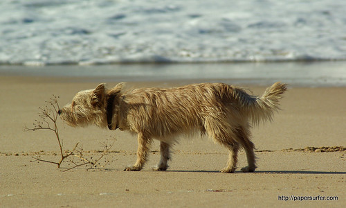 sniffy dog