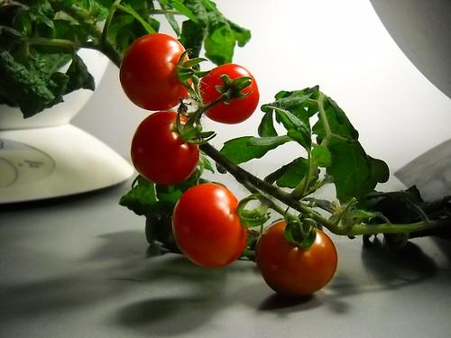 Aerogarden - Ripe Tomatoes