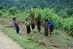 Children collecting wood (Noel Molony) Tags: family children rice health stories waterpumps healthcentre monvillage concernstaff educationonhealth hamkongvillage haumeuangdistrict pakhataivillage pasortvillage salongvillage salorvillage samhouay sopkhamvillage tarkaivillage thathvillage