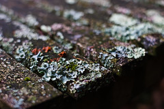 Bench lichen (Skink74) Tags: uk winter red england green 20d closeup bench grey bokeh seat hampshire weathered lichen hursley eos20d nikkor35f14 nikkor35mm114ai