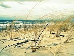 (anka.anka28) Tags: sea beach grass sand trawa morze plaża jastarnia półwysephelski piach helpenincula