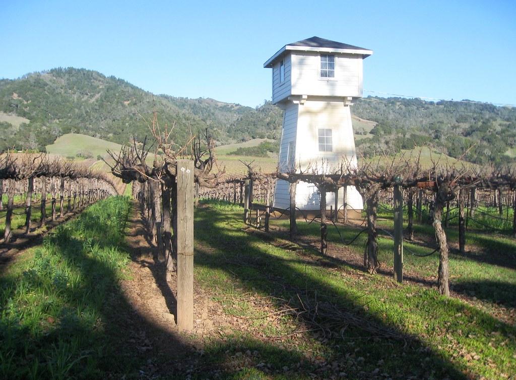 Silver Oak cabernet, Alexander Valley Vineyard, Sonoma County, CA