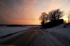 Apricot Sunset (nikkorglass) Tags: sunset nikon sweden apricot sverige nikkor solnedgng potofgold aprikos d80 sigma1850mmf28exdcmacro