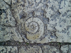 Ancona pavement (Gregelope) Tags: beautiful stone architecture textures fossils