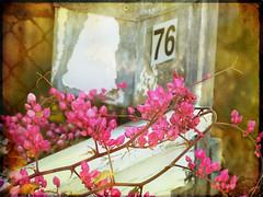 365/72: Please, Mr Postman ... (jane.garratt) Tags: flowers plants postprocessed photoshop lyrics bokeh quote letterbox goldenbrown coralvine natureycrap colourpink pleasemrpostman texturebyborealnz themarvelettes texturebyyourbartender sadbokehfriday texturesinlayers 365oneyearon withasong rememberingtoby