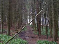 DSCF1139 (jack wakefield17) Tags: landscape yorkshire kirkby lonsdale