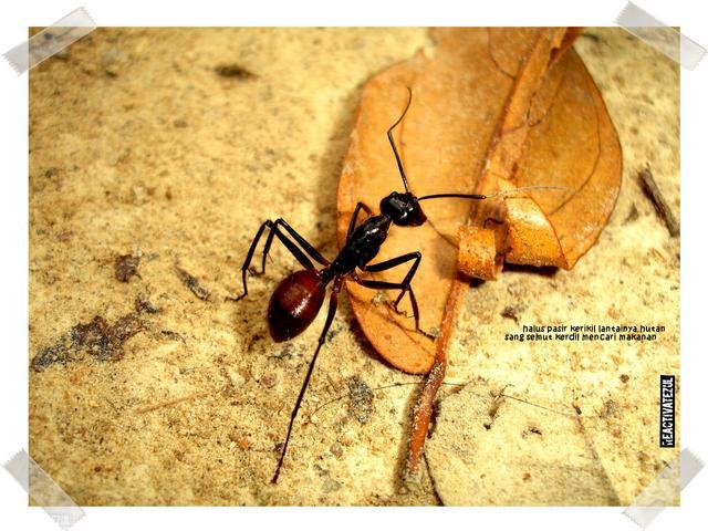 keindahan-serangga-di-Batu-Maloi-1