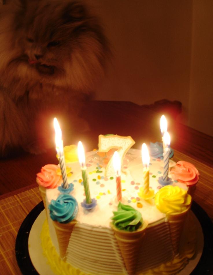 Nermal's 7th Birthday 016