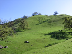 Very green days ahead (Mission San Jose District, California, United States) Photo