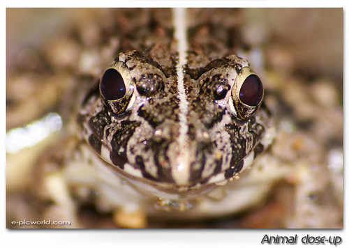 Face to face with Mr frog picture