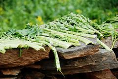 Drying veggie  (MelindaChan ^..^) Tags: china plant green countryside village vegetable mel veggie melinda drying wuyuan jiangxi        chanmelmel  melindachan