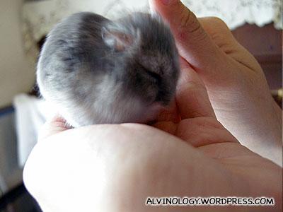 Good hamster!