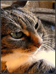 Conga (Nattie Croft) Tags: light cat resting 15challengeswinner