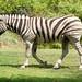 Woodland Park Zoo Seattle 038